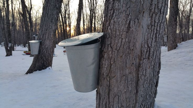 """Maple Syrup Bucket"" by TravelPod blogger joemurphy from the entry ""Boston to Quebec"" on Monday, April  6, 2015 in Québec, Canada"