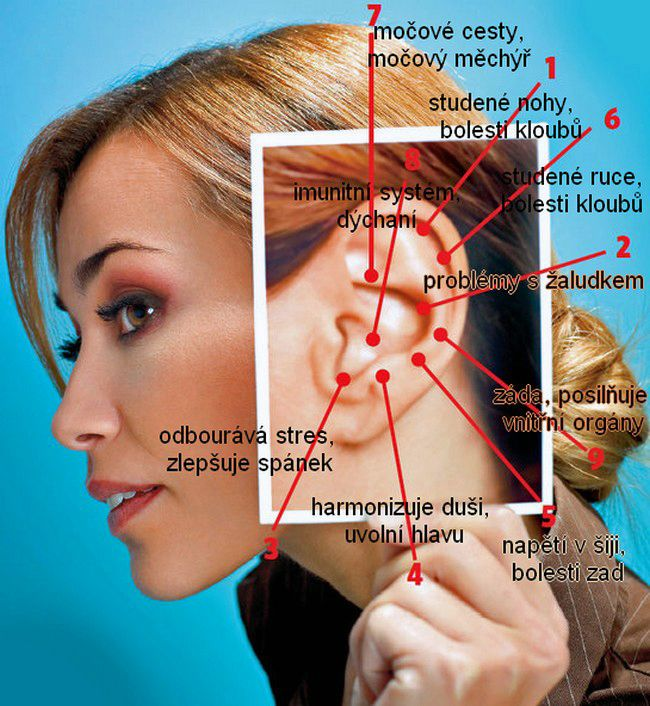 Léčivé body na uchu Tahejte si vnější ucho Začněte na vrchní části ucha. Na konci vrchu ucha se chyťte ukazováčkem a palcem tak, že budete mít palec za uchem. Lehkým tlakem přejíždějte z vnitřku ucha směrem ven. Tak promasírujte postupně celé ucho. Ušní lalůček táhněte opravdu dlouho. Třikrát zopakujte.   Masírujte i za uchem Nakonec vztyčeným ukazováčkem masírujte jamku za uchem. Začněte nahoře a pokračujte jemným tlakem dolů až na konec ucha. To opakujte třikrát po sobě. Následně…