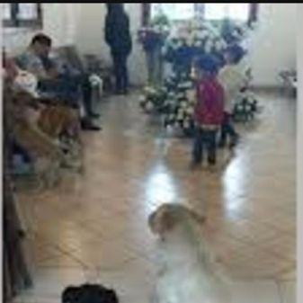 """★유기견들의 은혜 보답(報恩)이 사람보다 낫군요 ㅠㅠ★ 며칠전 멕시코의 한 장례식장에서 믿을수 없는 조문 행렬이 있었다고 영국 메트로지가 보도했습니다. --------------  살아 생전, 길에서 생활하는 동물들의 '대모'였던 마가리타 수아레즈(Margarita Suarez)의 장례식이었습니다.  쿠에르나바카로에 살던 그녀는 매일 아침 자신의 집 앞을 오가는 길고양이와 유기견들의 밥을 챙겨주고 알뜰살뜰 챙겼다고 합니다. 지병으로 최근 세상을 떴는데, 장례식장에 견공들이 나타났다는군요.  견공들은 고인의 영정을 처연하게 바라보며 머물렀습니다. 이어 운구차의 뒤를 따라갔으며, 화장 준비가 끝난 후에야 떠났다고 합니다.  딸 패트리샤 우루띠아는 """"엄마가 돌보던 개들이 애도의 뜻을 전하기 위해 온 것 같다""""며 감동의 눈물을 흘렸다고 합니다. ------------------ 휴~~ 사람보다 낫지요?  #유기견   #보은   #조문   #감동"""