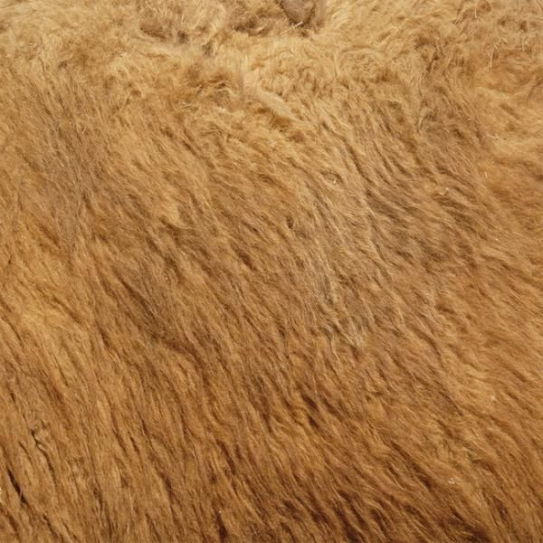 Lion Fur Sample Lion Print Lion Photo Wallpaper