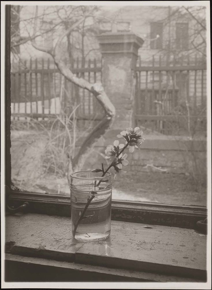 Josef Sudek | Museum of Fine Arts, Boston
