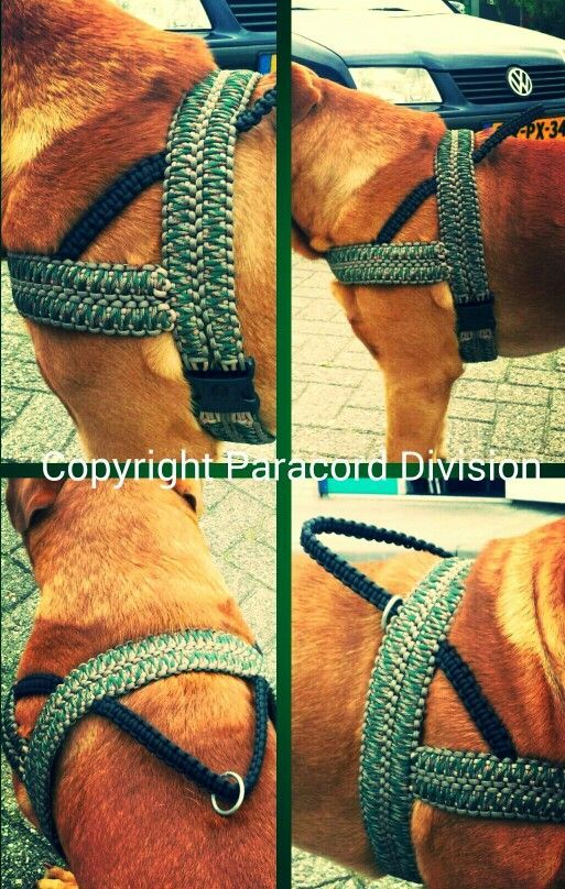 How about this? EXCLUSIVE @ PARACORD DIVISION: Paracord Dog Harness!! #paracorddivision: