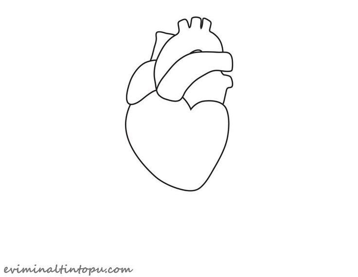organlarımız temalı kartlar(11)  |   Evimin Altın Topu