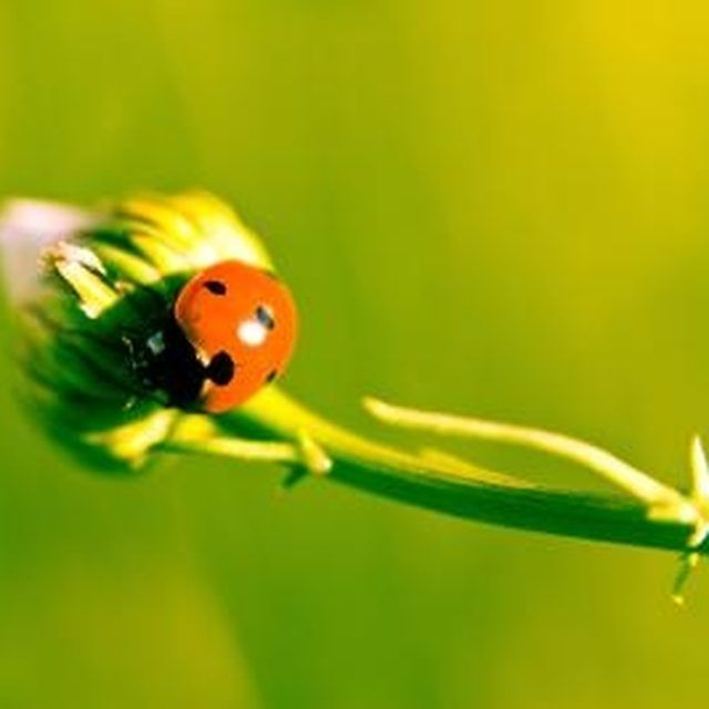 How To Get Rid Of Yellow Ladybugs In House