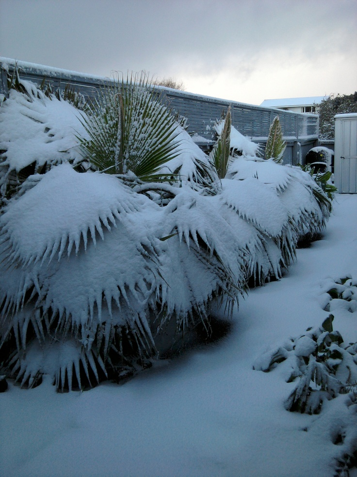 my palms laden with snow - not your average seaside advertorial!
