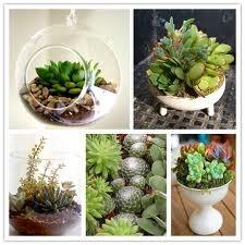 : Google Image, Green Thumb, Minis Gardens, Succulents Gardens, Neat Plants, Outdoor Decor, Plants Ideas, Succulents Centerpieces, Kraft Bees