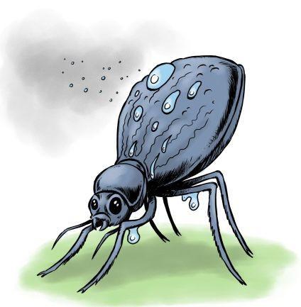 """Le Scarabée du Désert """"Stenocara"""" (famille des coléoptères) a plus d'un tour dans son sac pour se désaltérer. Cette charmante bête vit en plein désert de Namibie, sur la côte sud-ouest de l'Afrique :une région très sèche (peu de précipitations), avec de hautes températures, de forts vents mais aussi un brouillard matinal qui provient de l'océan Atlantique (pouvant atteindre 100 km d'étendue à l'intérieur des terres, et ce entre 60 et 200 jours par an). Or il s'avère que ce soit la…"""