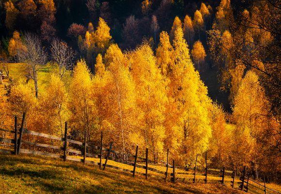 The Golden Rains of Autumn