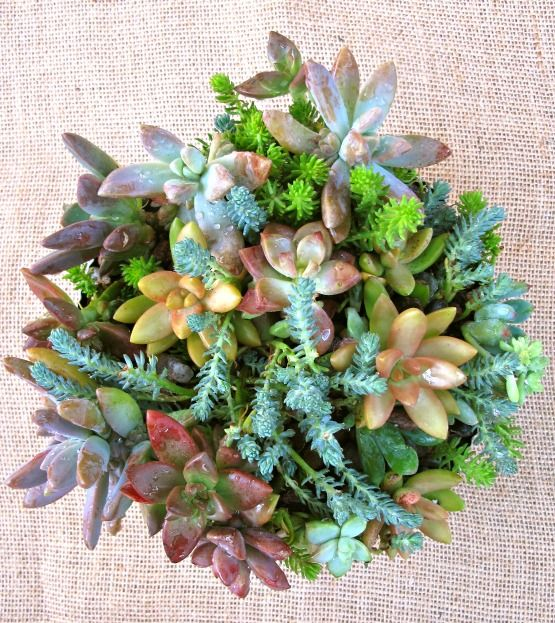 succulent dish garden hardware store re purpose