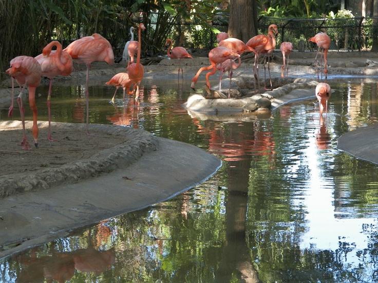 Contraste de vivo color en el paseo por el Zoológico. Casuso Fotos