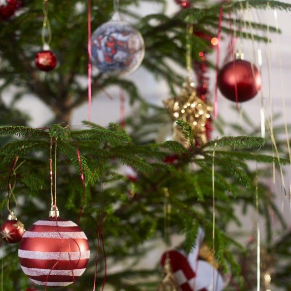 this is the optimum time to buy your christmas tree - Buy Christmas Tree