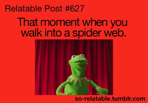 relatable posts | scary gif gifs that awkward moment relate spiders relatable that ...