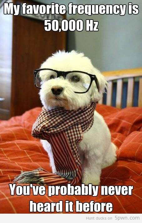 "A little ""audiology humor"" to keep my smiling and laughing throughout the day. Introducing you to hipster dog #mydayinstitchfix"