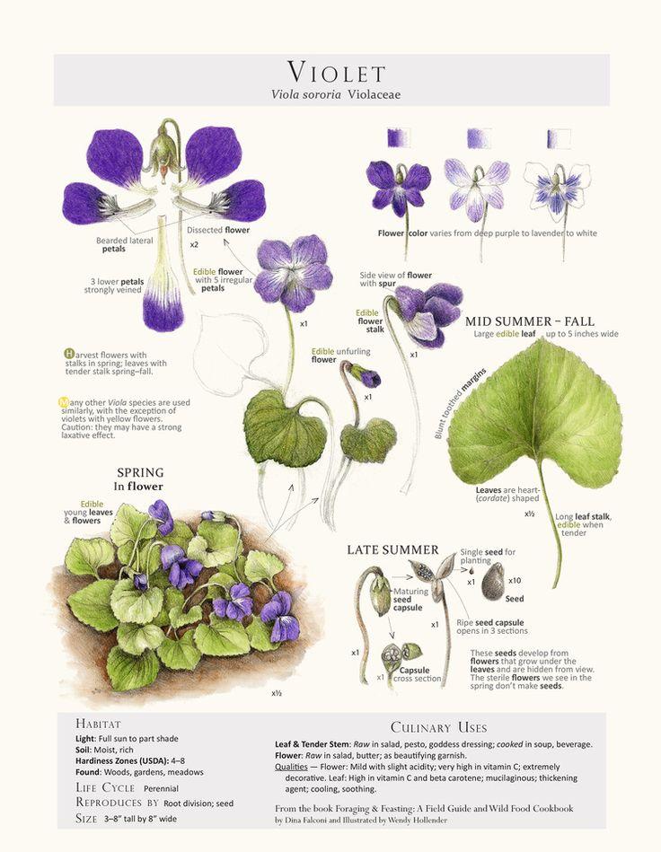 violetprint.jpg