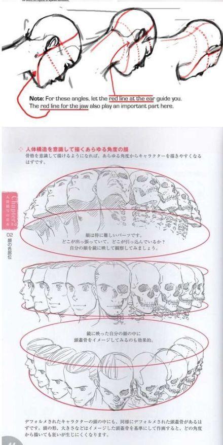 人体头部各个角度的都是的表现和研究