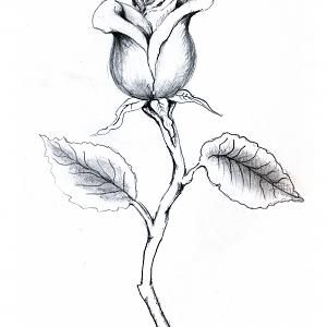 rose with stem drawing rosebud with stem this draws me