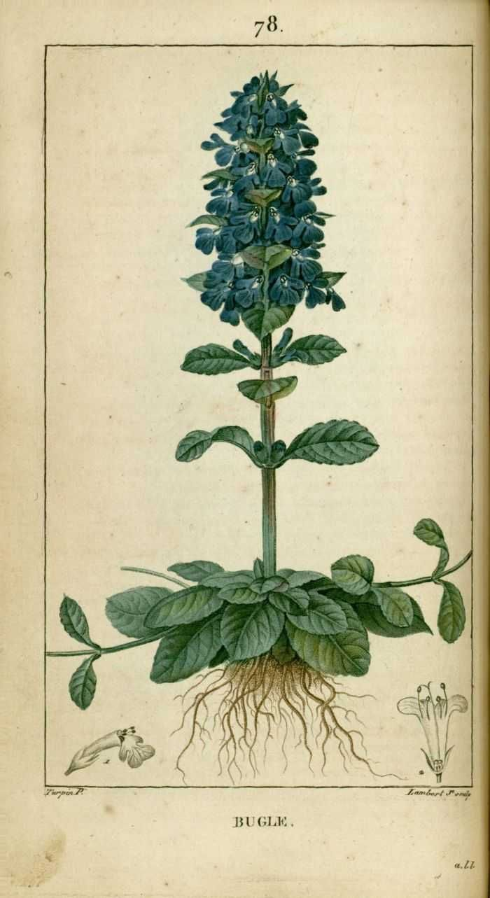 1000 images about herbier on pinterest fruit illustration