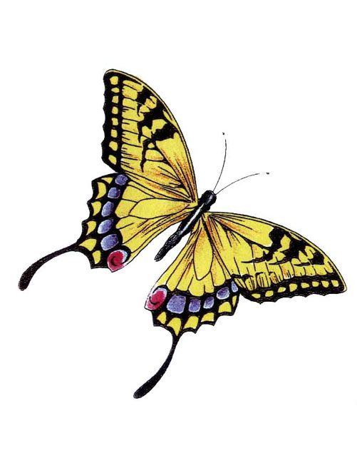 Yellow Monarch Butterfly Tattoo Yellow Monarch Butterfly
