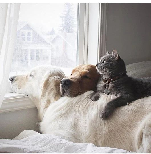 Oddly United Friends Joined Together By NapTime  LoL - Tap the pin for the most adorable pawtastic fur baby apparel! You'll love the dog clothes and cat clothes! <3