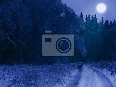 Papier peint Nuit d'hiver dans la forêt (avec un loup solitaire sur la route)