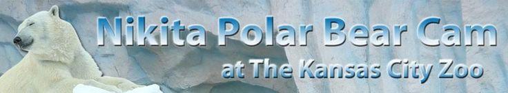 Nikita Polar Bear Cam   Kansas City Zoo - KCTV5