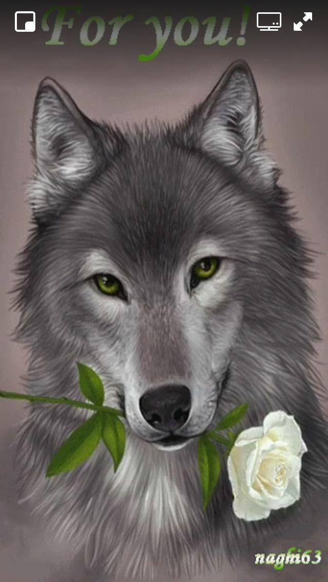 Animals | bilder gemalt | Heulender wolf, Wolf und Wolf bilder