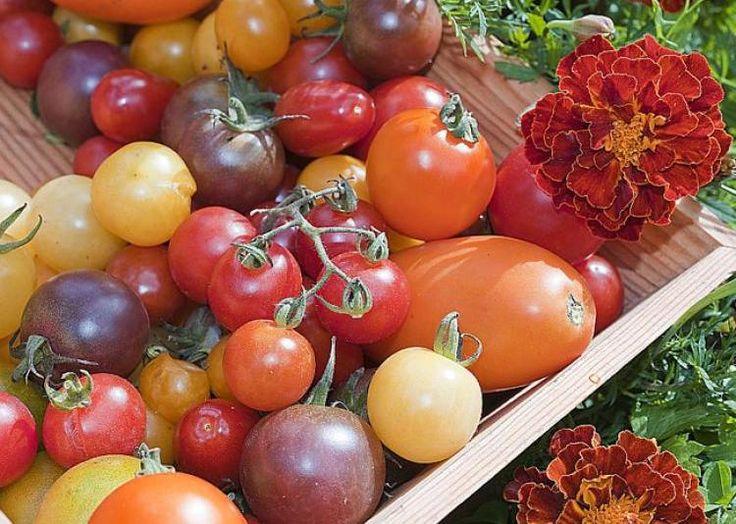 les 25 meilleures id es concernant tomate vari t sur pinterest vari t de courgette vari t. Black Bedroom Furniture Sets. Home Design Ideas