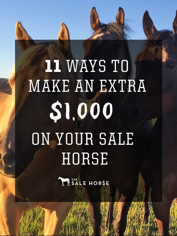 171 best horse business images on Pinterest Horses, Horse - horse sales contracts
