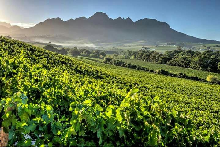 Interesting wine estates to visit in South Africa - Audacia - The Red Wine Boutique Winery - The name 'Audacia' is synonymous with a spirit of adventure and boldness. These characteristics are epitomised in an audacious approach to viticulture and winemaking. ....#wine #southafrica #wine estate #tourism #extremefrontiers #wineroute #adventure #holiday #vacation #vineyard #tourist #travel