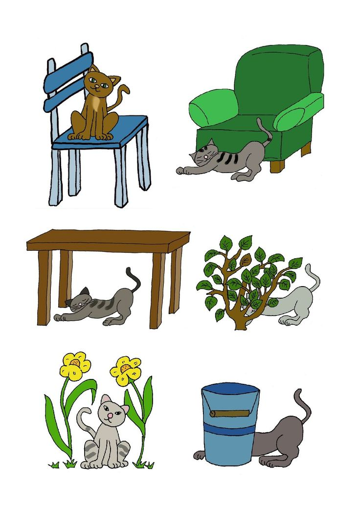 Où est le chat?