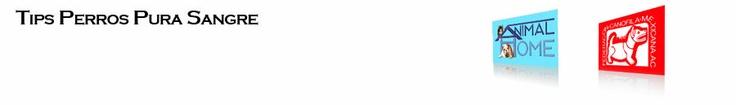 Cuidados del cachorro recien nacido, Perros huerfanos, alimentacion en cachorros -Federación Canófila Mexicana -Revista Perros Pura Sangre -TIPPS -Hospital Veterinario Animal Home -Iker Asteinza