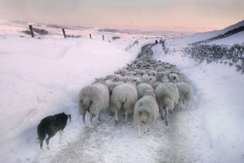 "pagewoman:  ""  Malham Moor in Winter, North Yorkshire, England  by Stephen Garnett  """