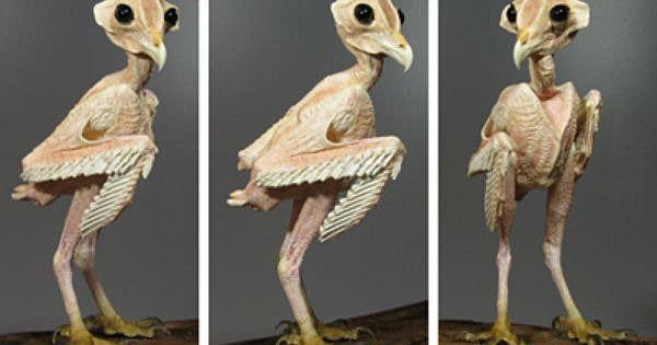 Когда-либо задавались вопросом, как будет выглядеть сова без перьев?