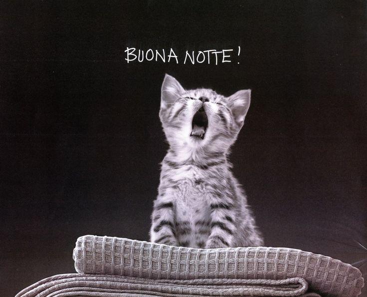 Massaggi e massaggi vi augura una dolce notte! #buonanotte #massaggirelax #massaggi #massaggio #massaggiroma #roma  www.massaggiemassaggi.it