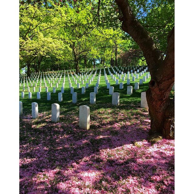 【cmayphotoz】さんのInstagramをピンしています。 《Arlington National Cemetery, Arlington, VA, USA #photography #instaphoto #instatravel #arlingtonnationalcemetery #arlington #va #virginia #election #cemetery #cherryblossoms #flower #nature #natural #cmayphotography #cmayphotoz #artsy #photographersofinstagram #pink #america #dc #washingtondc #springtime #throwback》