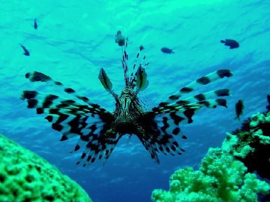 9 best images about jordan on pinterest red sea for Aqaba dive