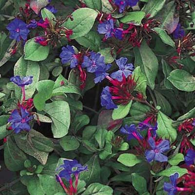 16 Best Part Shade Plants For Northern Minnesota Images On