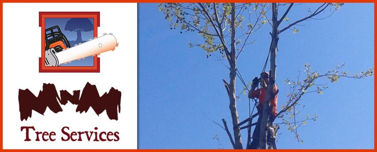 Thinning and Height Reduction at MNM Tree and Shrub Service  MNM Tree and Shrub Service offers fast and reliable tree thinning and height reduction services at your convenience, trimming as much or little as you prefer. Our experienced tree trimmers will have your trees looking clean and neat in no time. We understand what it takes to get the job done and operate with only the highest levels of professionalism, efficiency, and quality. If you are interested in our tree trimming services…
