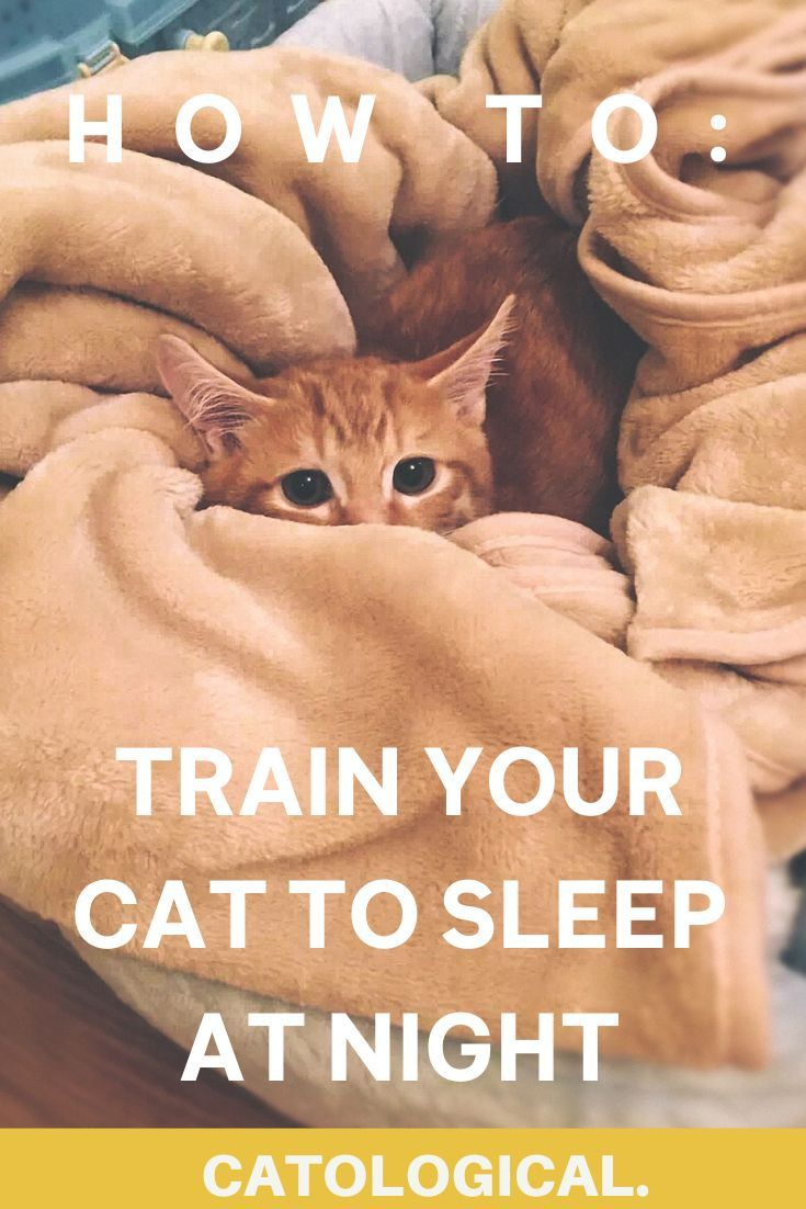 Are Cats Nocturnal How To Get Your Cat To Sleep At Night In 2020 Cat Training Cat Love Quotes Cat Quotes Funny