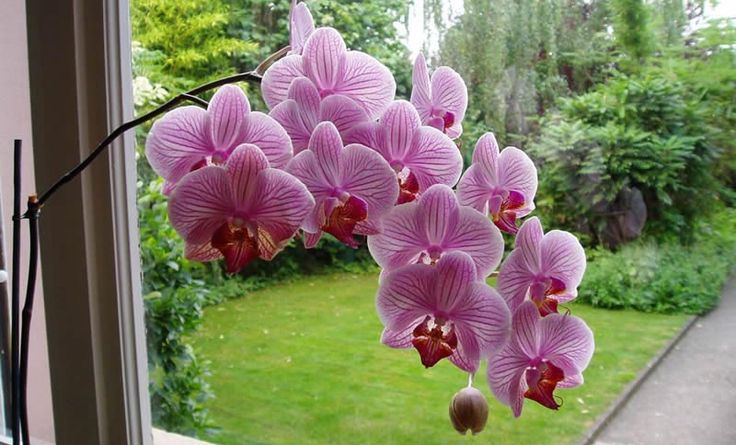 Flores de interior buscar con google arreglos florales for Cuidado de las orquideas moradas