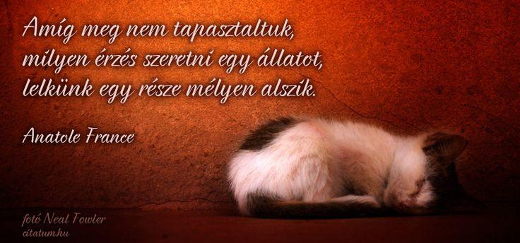 Anatole France idézet az állatok szeretetéről.