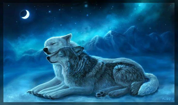 beautiful wolf couple