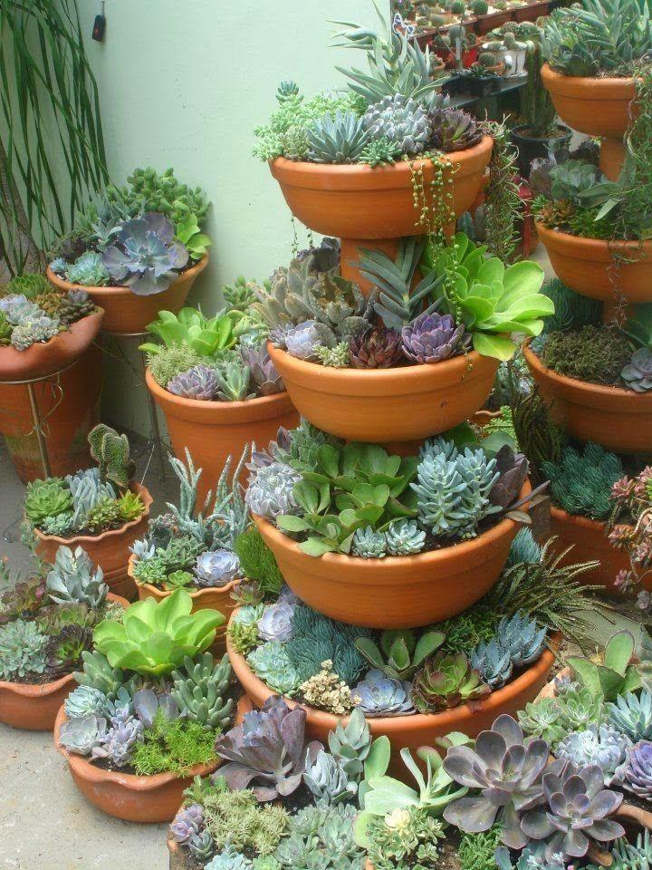 20 Ideas para decorar un lindo jardín con suculentas - Vida Lúcida