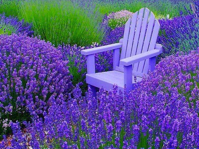 the cottage gardenBeautiful Flower, Gardens Ideas, Gardens Beautiful, Cottages Gardens, Cottages Ideas, Relaxing Chairs, Purple Carpets, Amazing Gardens, Purple Flower