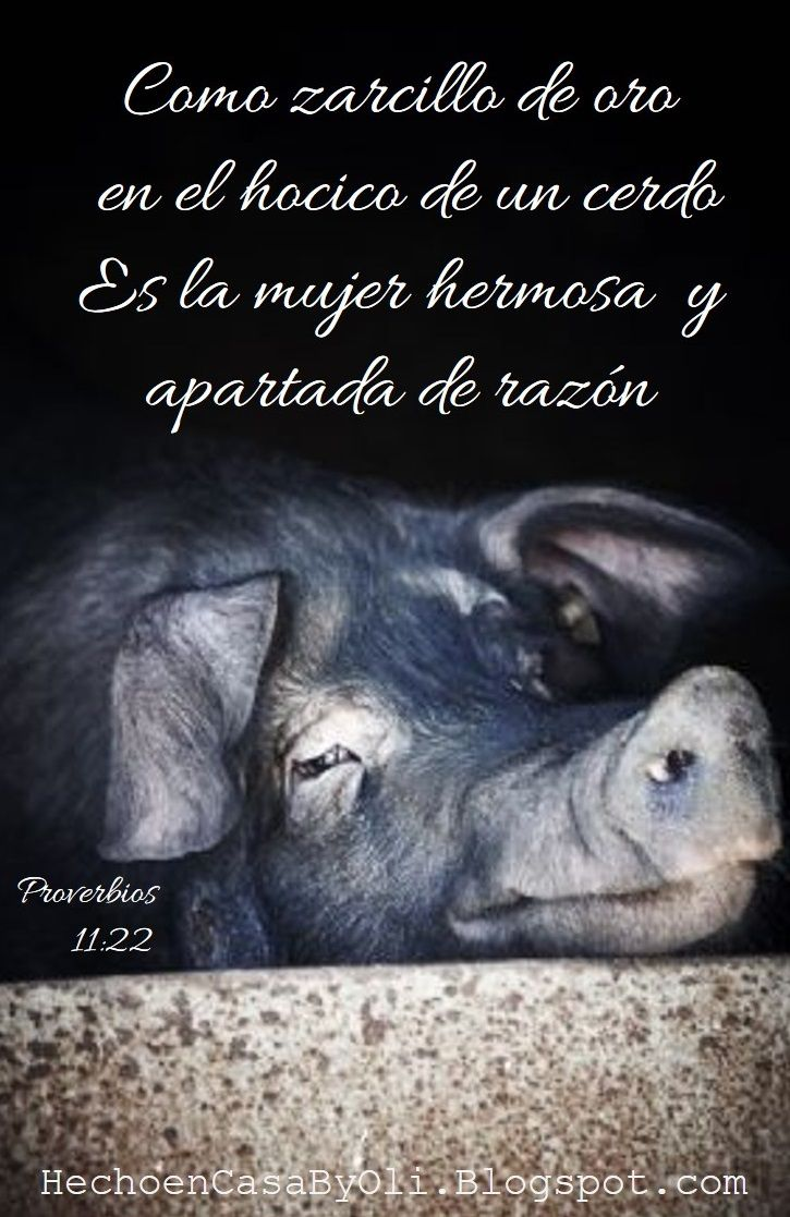Proverbios 11:22 Como zarcillo de oro en el hocico de un cerdo Es la mujer hermosa y apartada de razón.♔