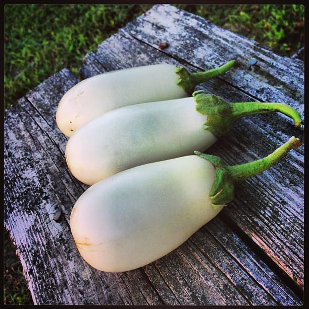 Excited to share the latest addition to my #etsy shop: White Eggplant Seeds - Casper Eggplant, Heirloom Non Gmo Variety - 50 Seeds http://etsy.me/2o259K3 #supplies #whiteeggplantseeds #organicseeds #nongmoseeds #heirloomeggplant #heirloomseeds #whiteeggplant #eggplants