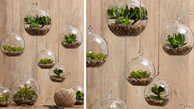 globes en verre suspendus terrarium plantes
