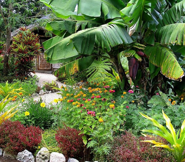 Les 62 meilleures images du tableau tropical garden for Jardins tropicaux contemporains