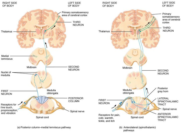Spinothalamic pathways