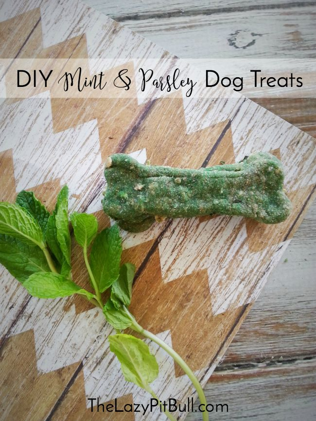 #DIY Mint & Parsley Dog Treats may help tame your mutt's doggy breath! | http://www.thelazypitbull.com/mint-parsley-dog-treats/